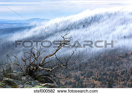 Stock Photo of Germany, Bavaria, Lusen, Bavarian Forest National.