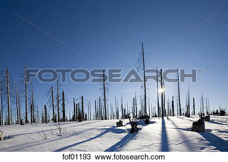 Stock Photo of Germany, Bavarian Forest, Lusen, Snowscape, Forest.