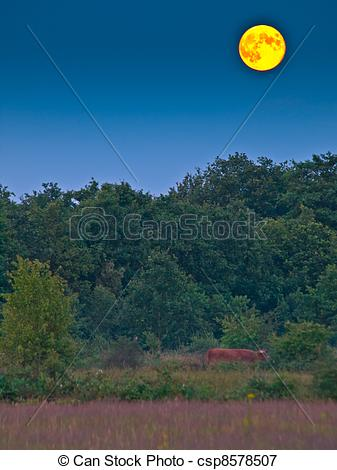 Picture of proportional full moon above forest edge portrait.