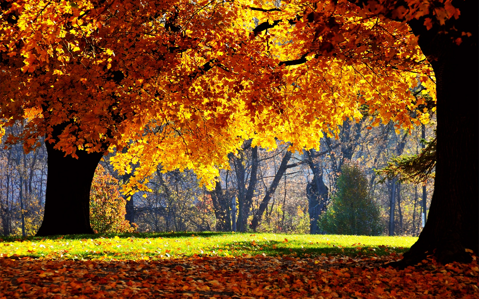 Fall backdrop clipart tree hd.
