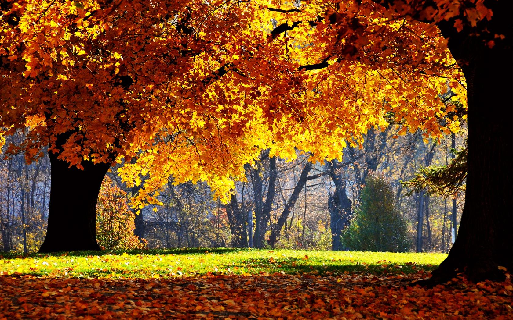 Fall backdrop clipart tree hd.