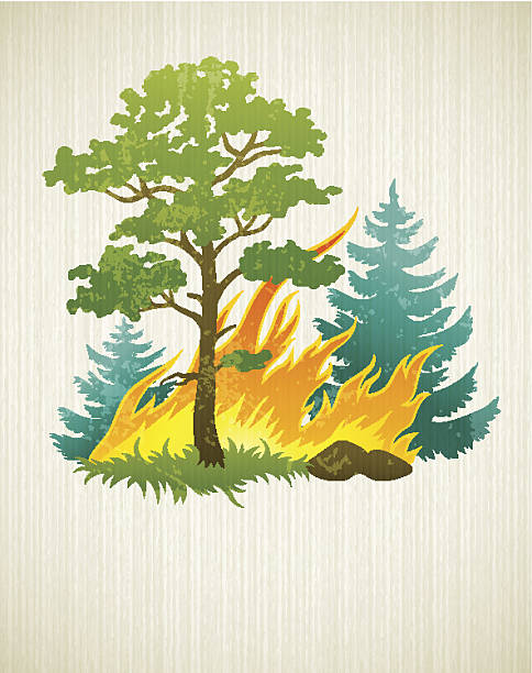 Best Forest Fire Illustrations, Royalty.