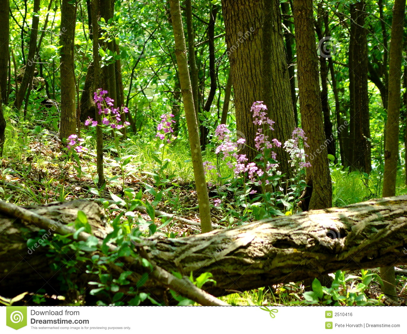 Forest Floor Tree Fall Royalty Free Stock Image.
