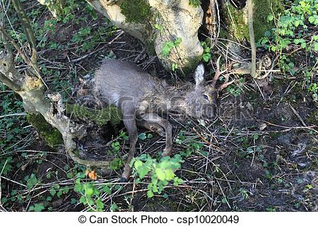 Stock Photo of dead deer on the forest floor.
