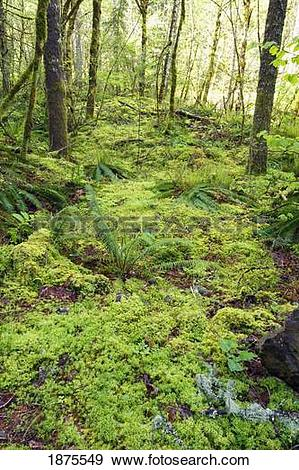 Stock Photograph of green foliage on the forest floor 1875549.