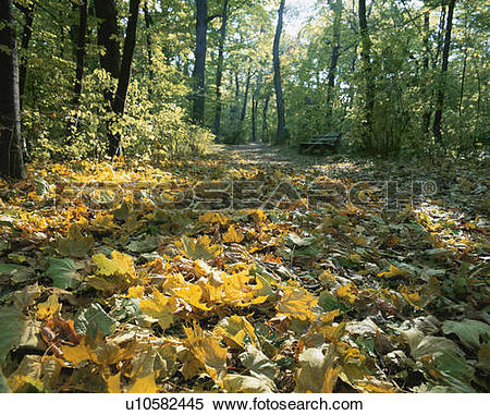 Stock Image of Leaves on forest floor at Schonbrunn Palace. Vienna.