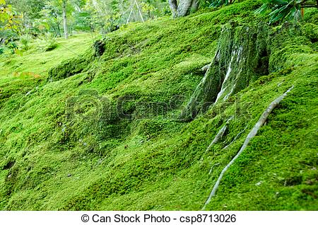 Stock Image of Moss on forest floor.