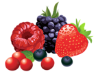 Forest Fruits PNG Vector Clipart Image.