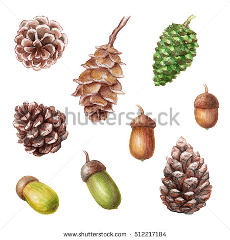 Watercolour Illustrations Walnuts Berries Acorns Other Stock.