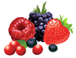Free 1,024 fruits pictures download.