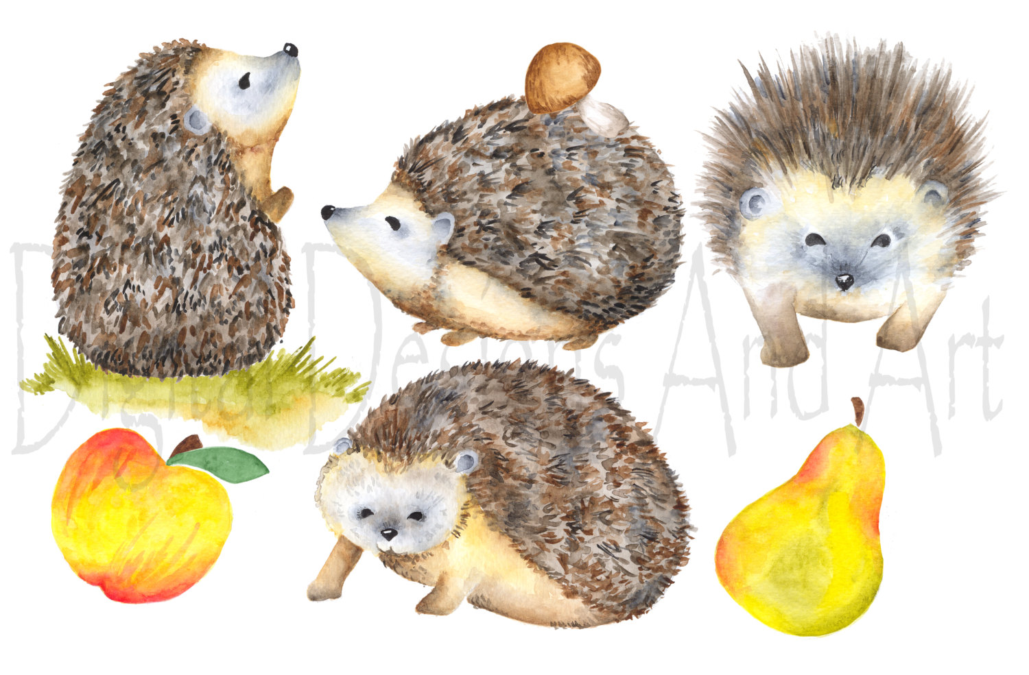 Watercolor hedgehog clipart, porcupine clipart, Forest animal.