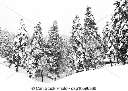 Stock Image of Dark and Misty Forest in Winter Landscape (black.