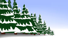 Coniferous Forest In Winter Stock Images.