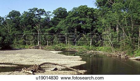 Stock Photography of Far East, Siberia, flora, forest, forestland.