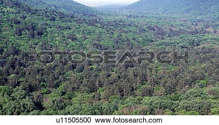 Stock Photography of Far East, Siberia, forest, forestland.