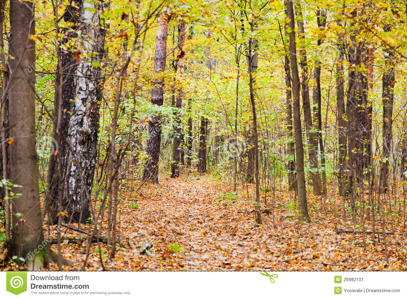 Leaf Litter Path In Autumn Forest Stock Image.