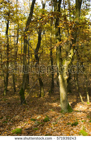 Leaf Litter Stock Photos, Royalty.
