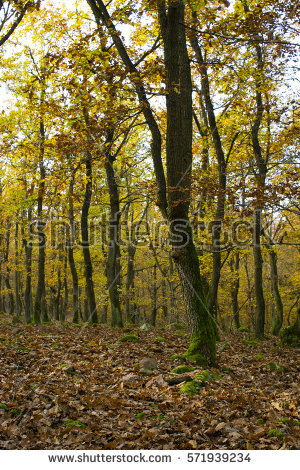 Leaf Litter Stock Photos, Royalty.