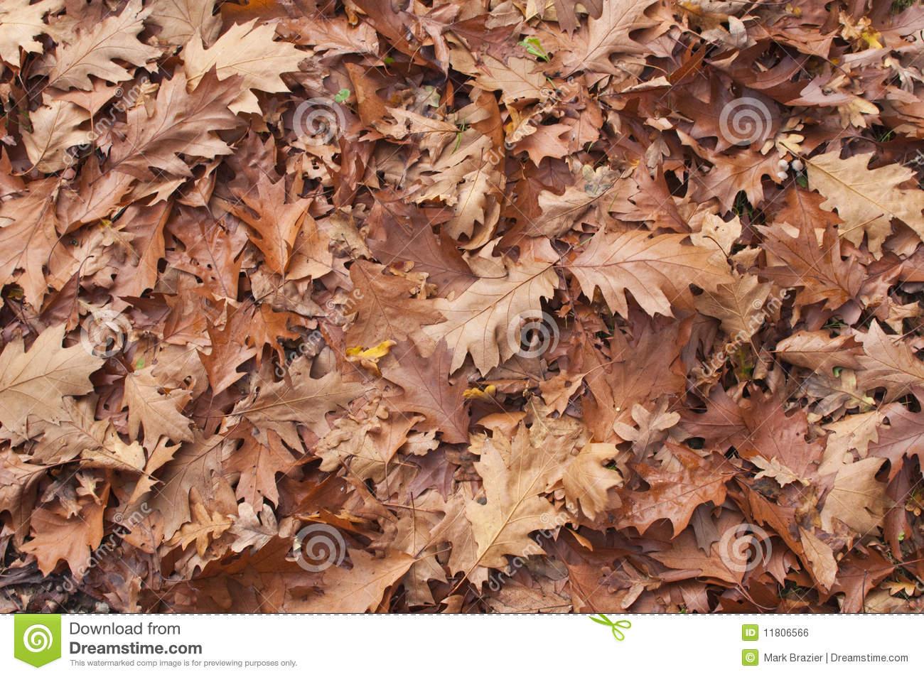 Leaf Litter Carpet Fallen On Woodland Floor Royalty Free Stock.