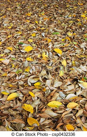 Stock Image of Leaf litter.