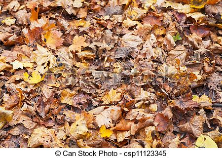 Stock Photo of brown red orange maple leaf litter in autumn forest.