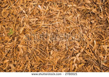 Leaf Litter On The Forest Floor Stock Photo 2780021 : Shutterstock.