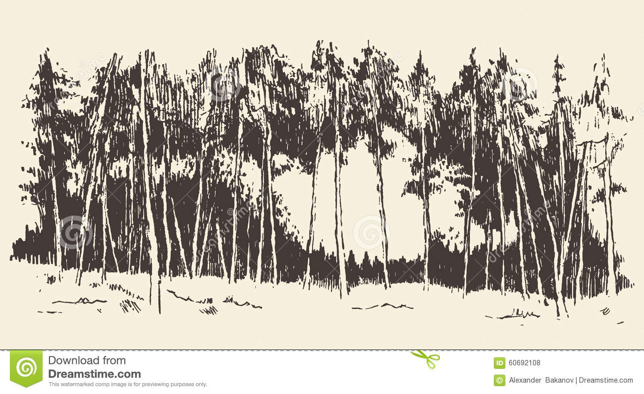 Hand Drawn Landscape Fir Forest Meadow Vector Stock Vector.