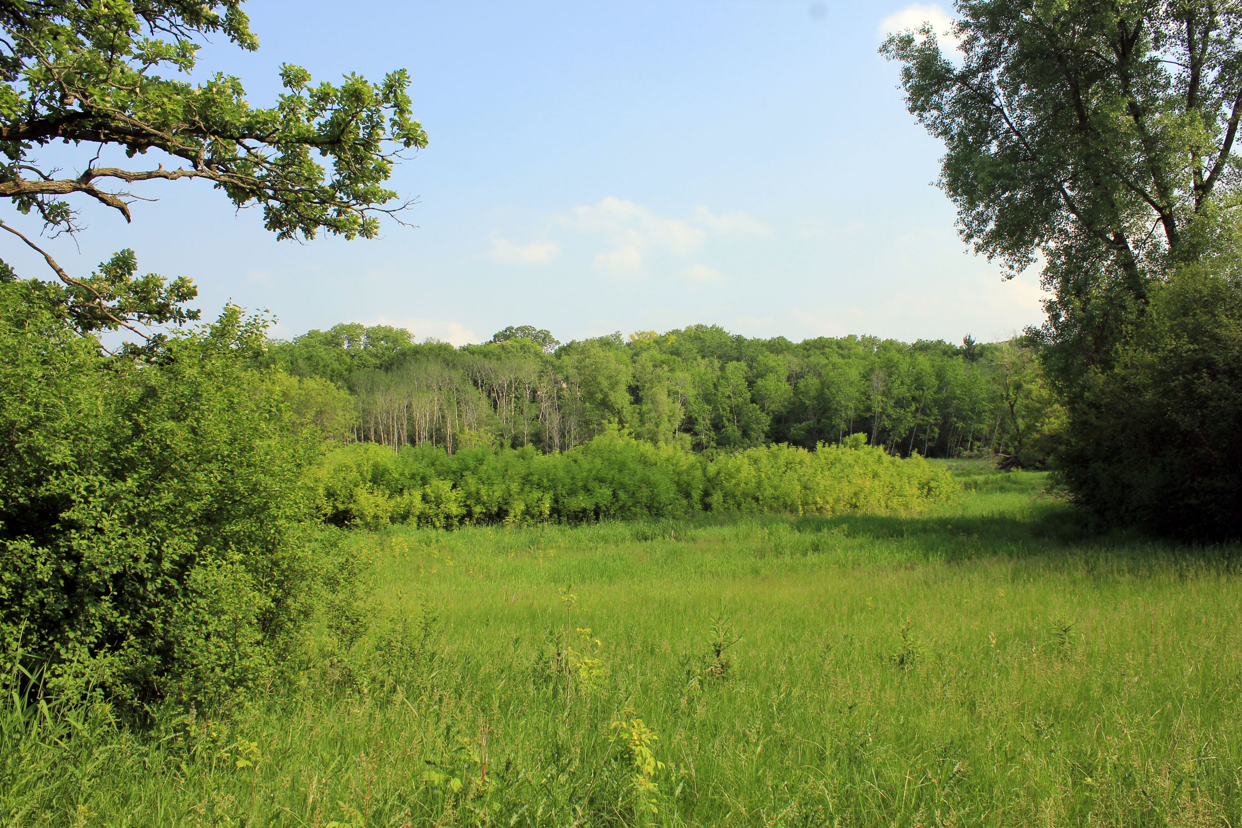 Forest, meadow, and clearing at Lapham Peak State Park, Wisconsin.