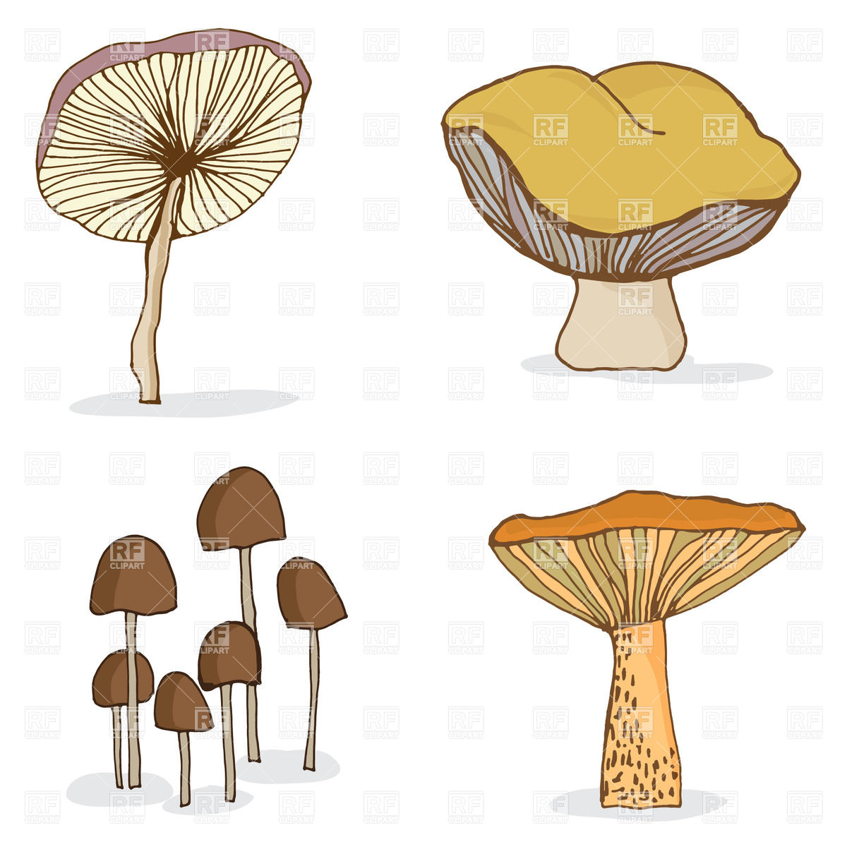Set of cartoon forest mushrooms Vector Image #39056.