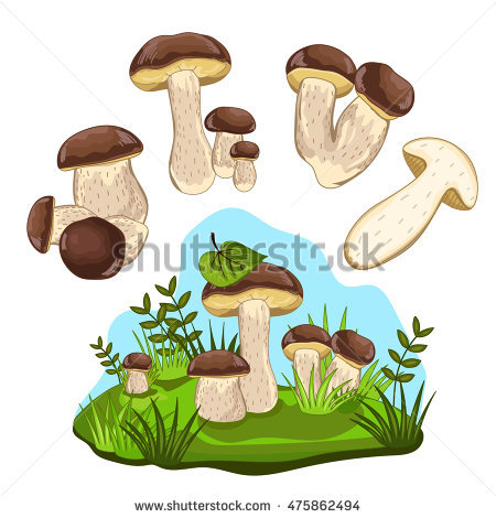 Cep Stock Photos, Royalty.