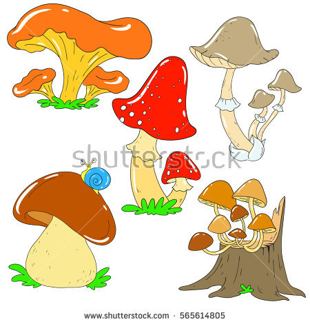 Chanterelle Mushrooms Stock Photos, Royalty.