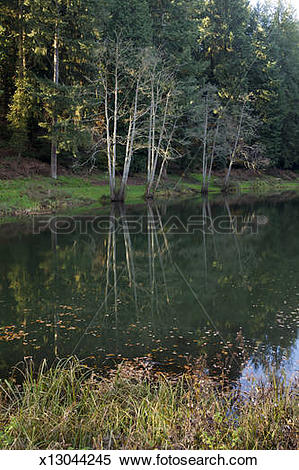Stock Image of Autumn in the Forest of Dean.