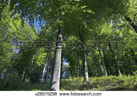 Pictures of England, Gloucestershire, Forest of Dean, Majestic.
