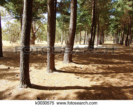 Stock Image of Forest Shadows k0030575.