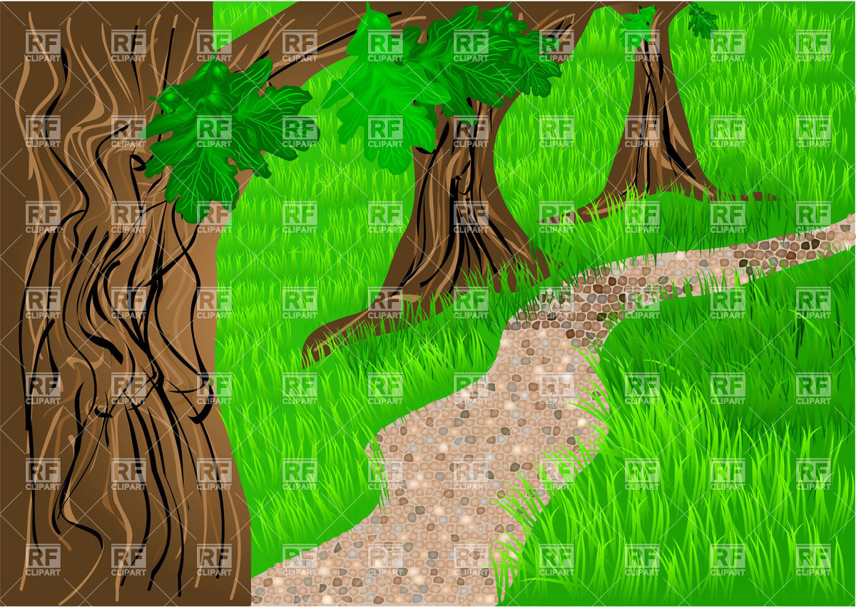 Path in forest between trees and grass Vector Image #34046.