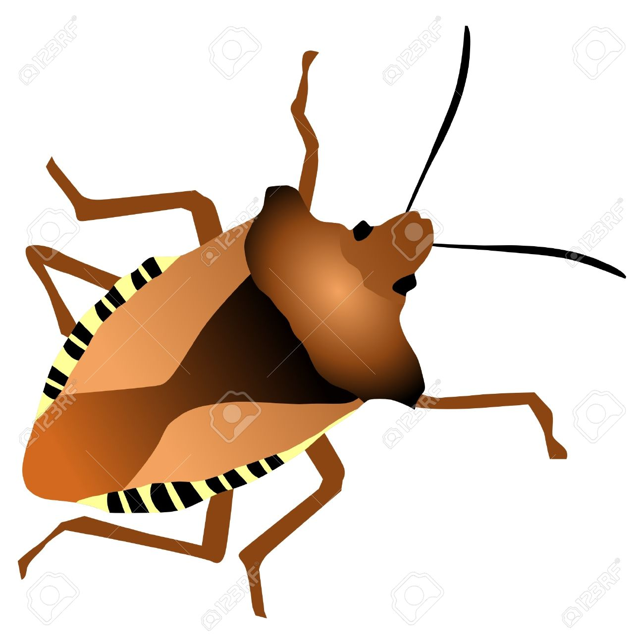 A Colored Illustration With An Insect. Forest Bug Royalty Free.