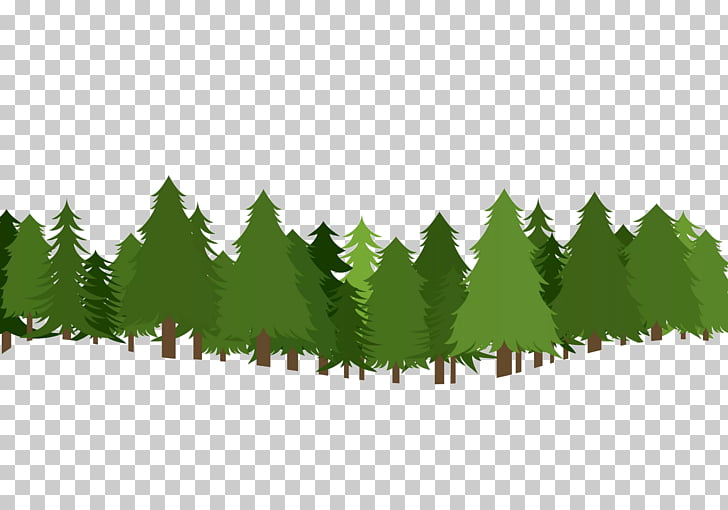 Christmas tree Pine , forest , green tree illustration PNG.