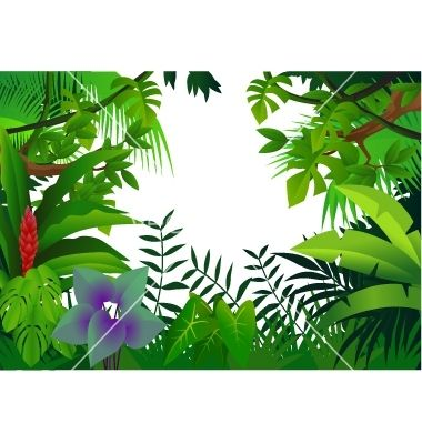 1000+ images about TROPICAL FOREST CLIP ART on Pinterest.