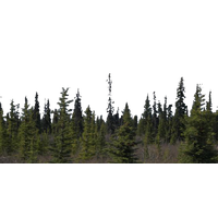 Download Forest Free PNG photo images and clipart.