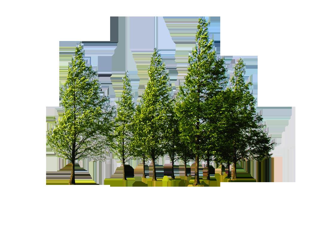 Forest PNG Transparent Images.