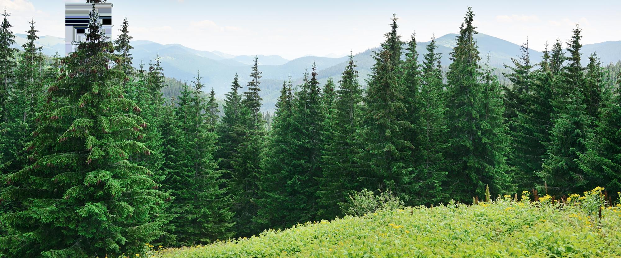 Forest PNG Images Transparent Free Download.