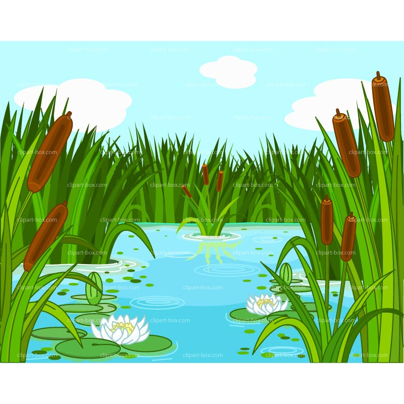 CLIPART POND.