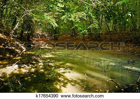 Stock Photography of Small forest pond under trees k17654390.