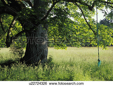 Stock Images of snakelum, whidbey, ebeys, rope, forest, green.