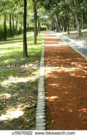 Stock Photo of Scenic Road, the route, the pavement, shady path of.