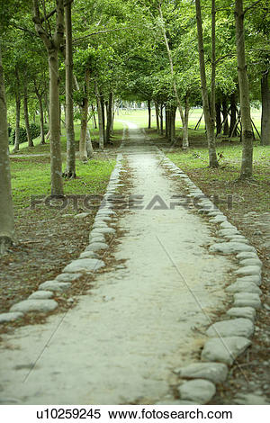 Stock Image of the route, Scenic Road, the forest, trees.