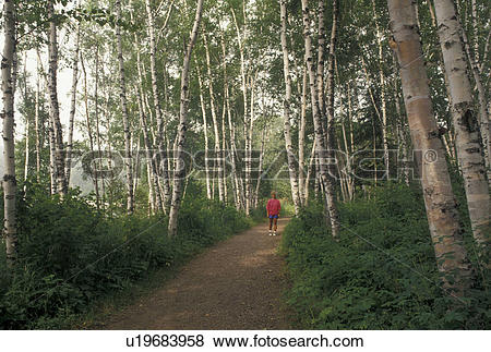 Pictures of birch tree, hiking, MN, Lake Superior, North Shore.