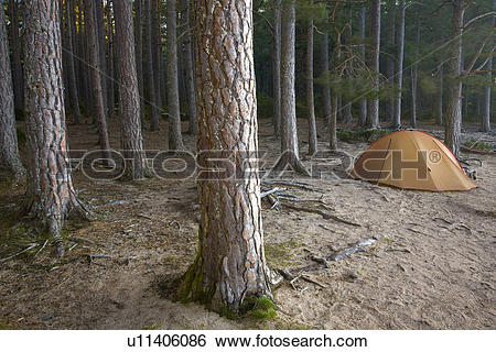 Stock Images of Scotland, Highland, Abernethy Forest. Camping in.