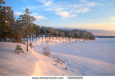 Pine Forest Shores Stock Photos, Images, & Pictures.