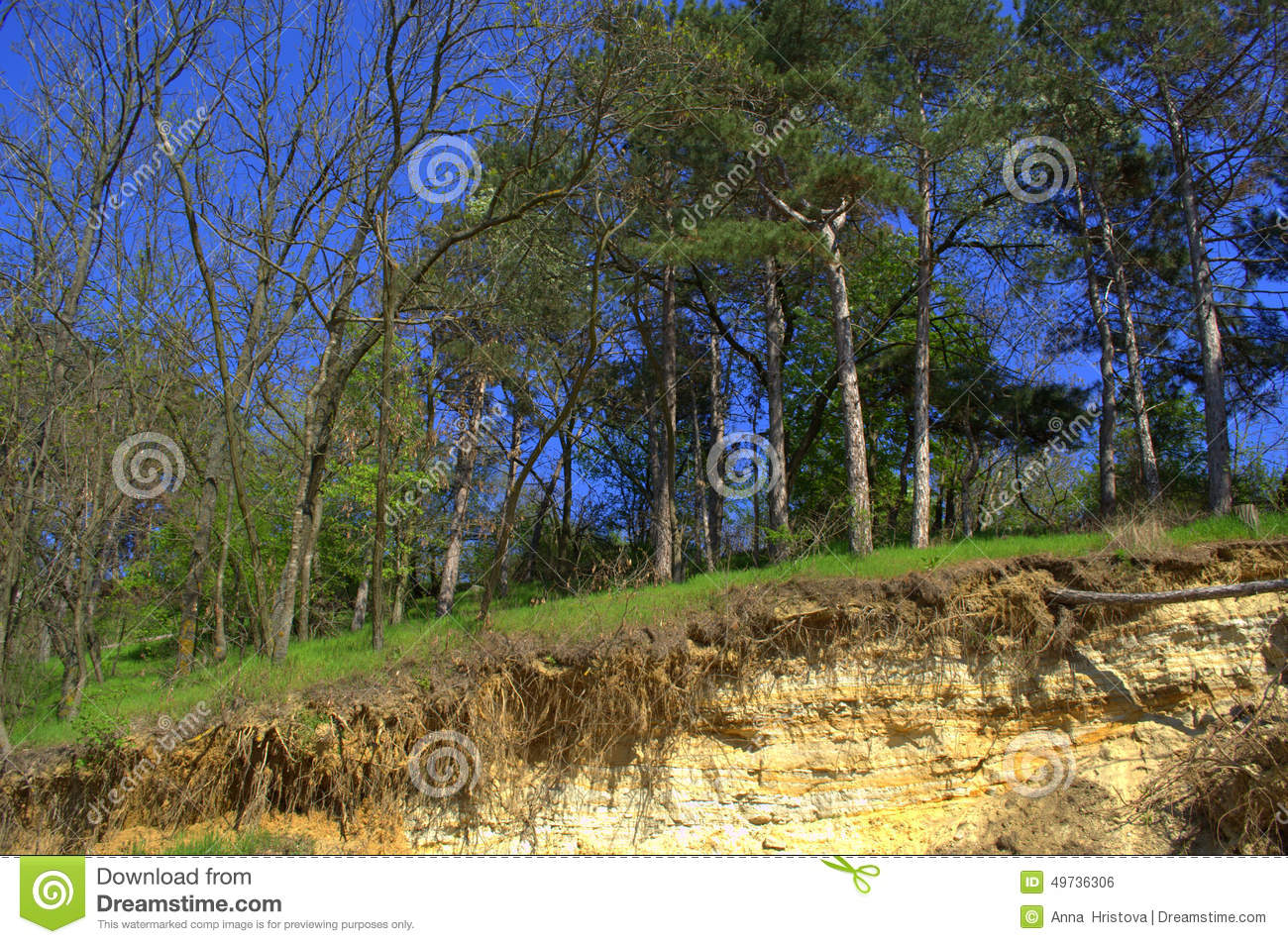Spring Forest On Several Underground Soil Layers Stock Photo.